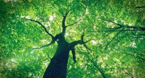Dia Internacional das florestas e árvores