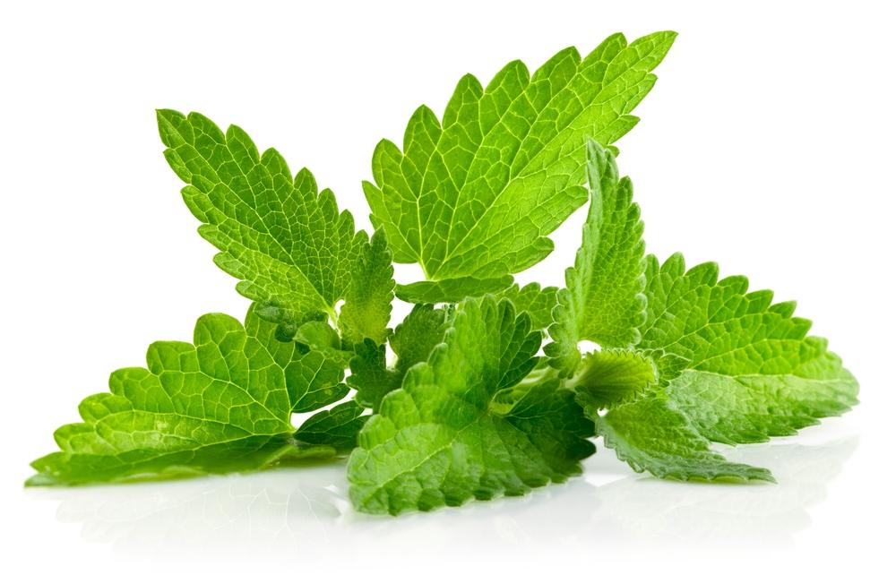 Especial de chás: Erva Cidreira ou Capim